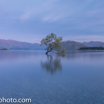 Glass Lake and the birds in the famous Wanaka Tree
