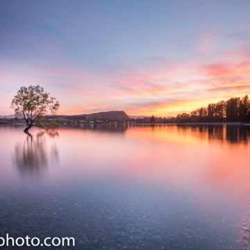 Sunrise at the famous Wanaka Tree in Wanaka, NZ