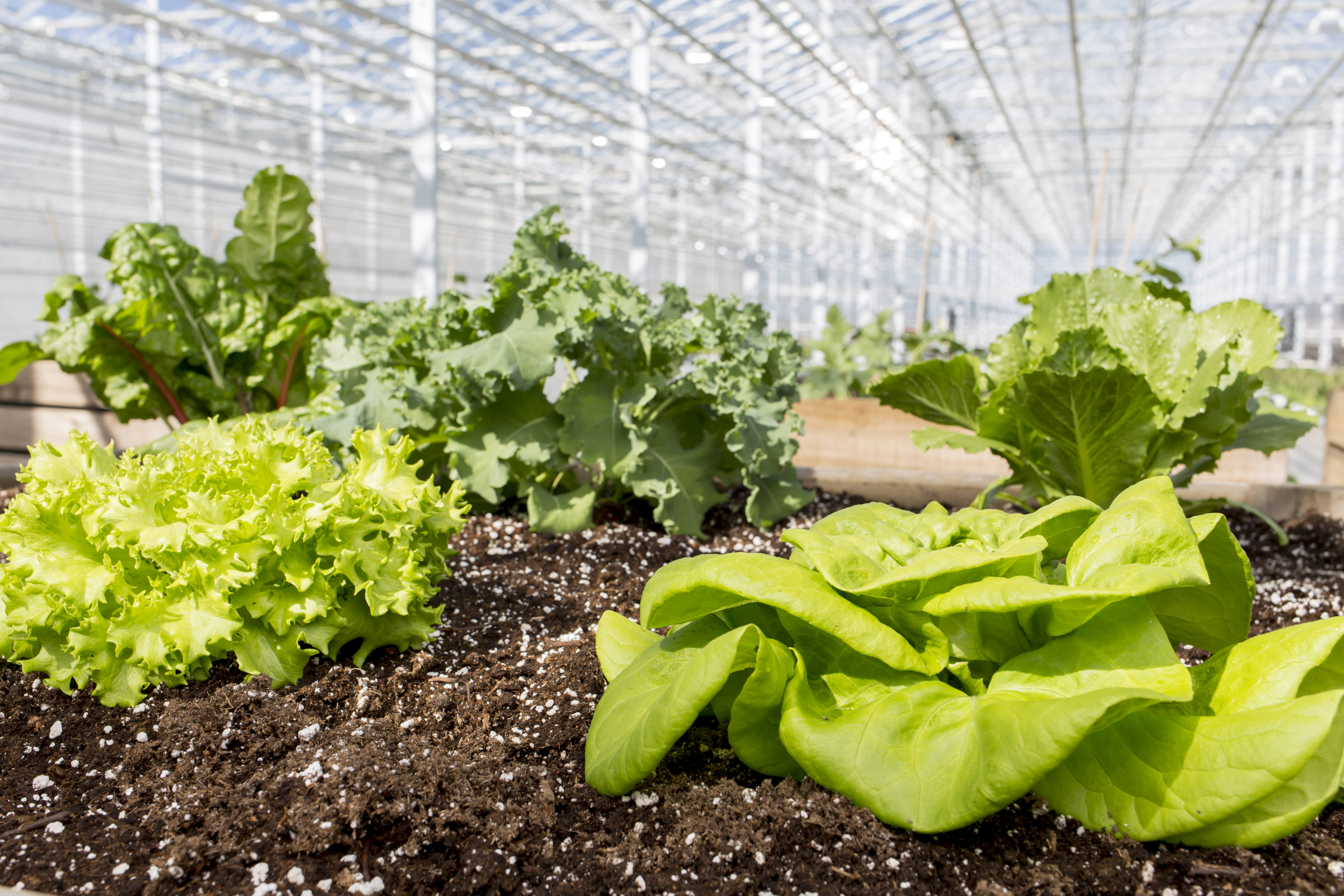 Ready, set, grow – Plantables changing the gardening landscape